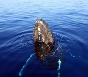 whalewatchoceansports1-1-14 - Diane Zander
